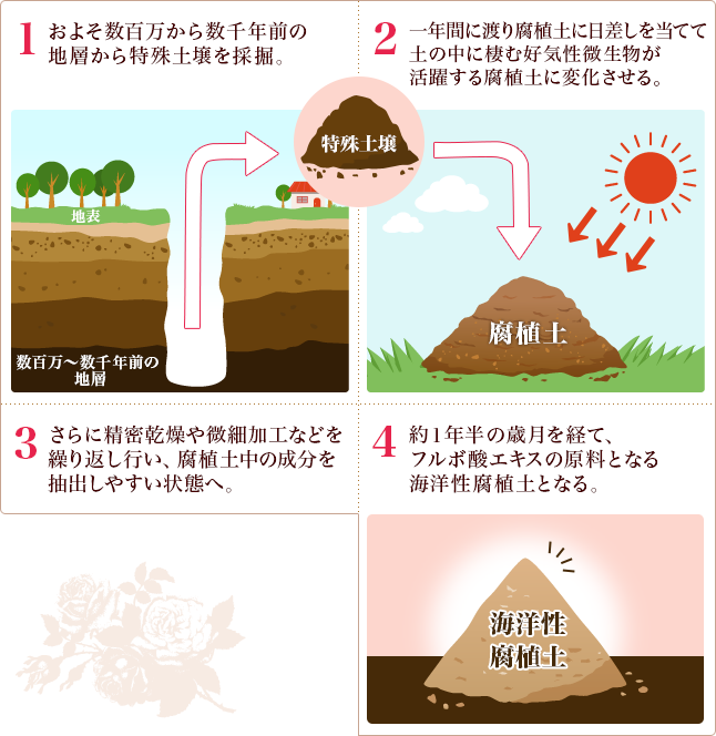 海洋性腐植土壌